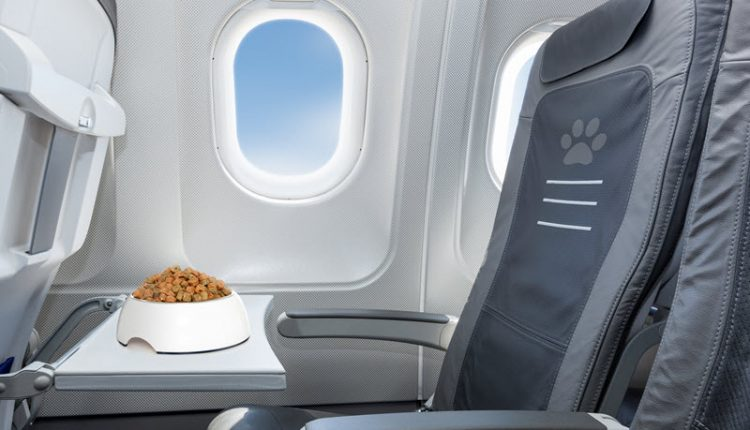 Which Airlines Carry Pets
